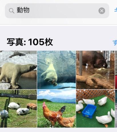 動物で検索