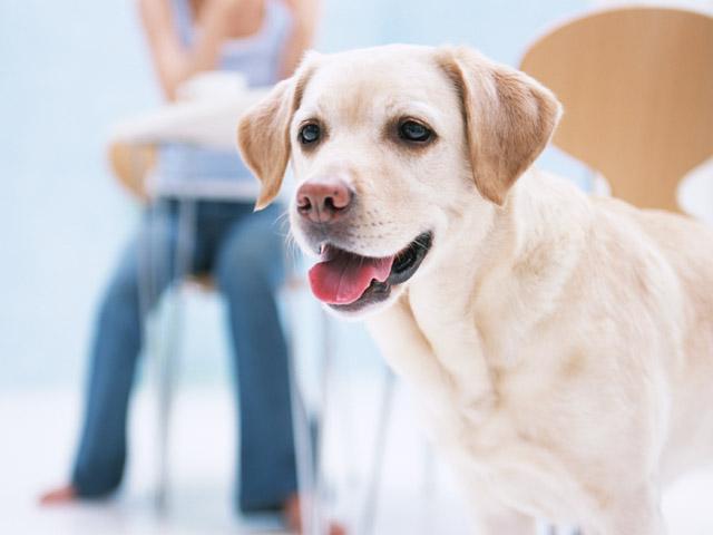 愛犬と同じ目線で撮る